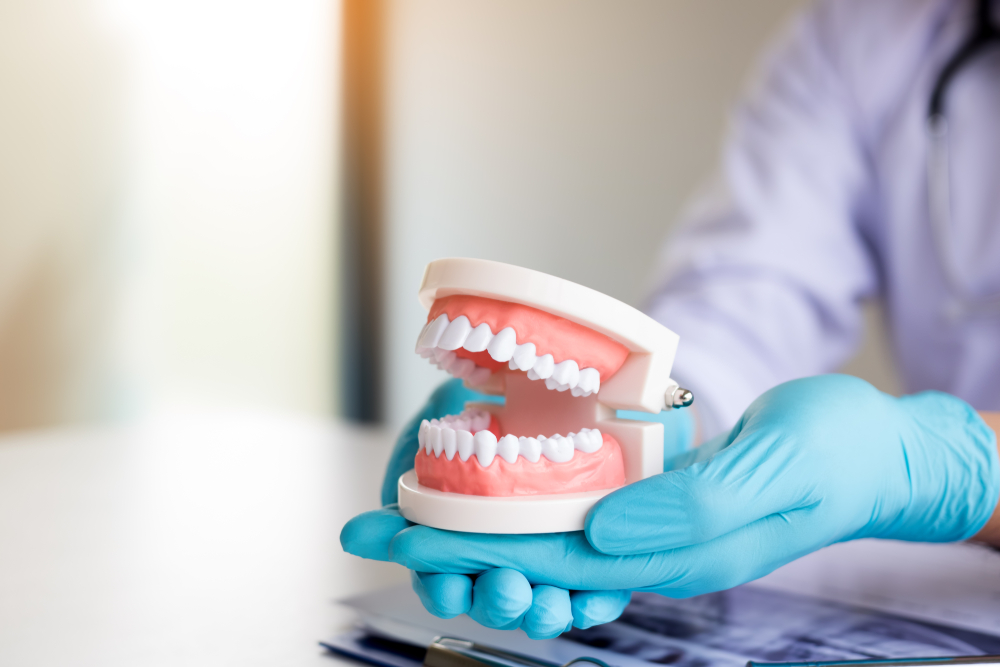 a denturist holding a model of teeth